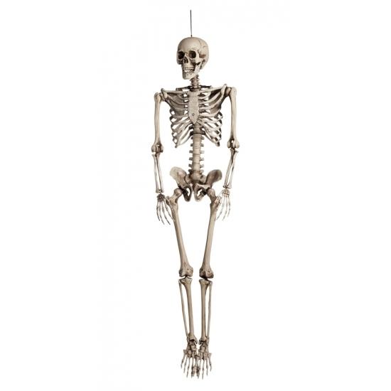 Groot Decoratie Skelet 160 Cm