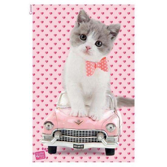 Kitten katten poster 61 x 91,5 cm