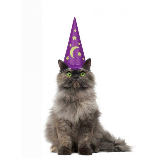 Paarse tovenaarshoed voor je kat. de paarse hoed met glow in the dark sterren is ca. 16 cm lang wanneer deze ...