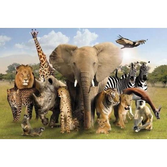 Decoratie poster dieren